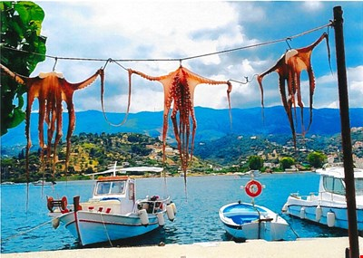 Octopi hanging out to dry
