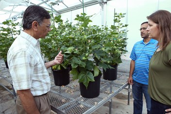 Dr. Keerti Rathore discusses the ultra-low gossypol cotton with team members Dr. Devendra Pandeya and LeAnne Campbell '97.
