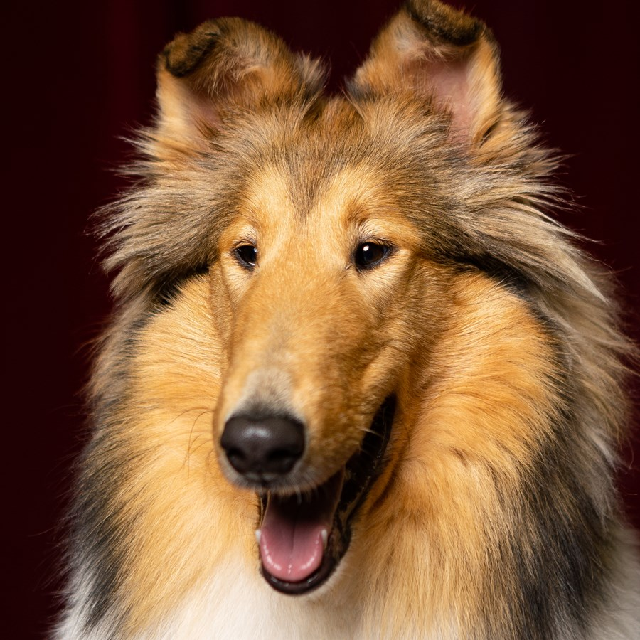 Future Reveille X donated to Texas A&M